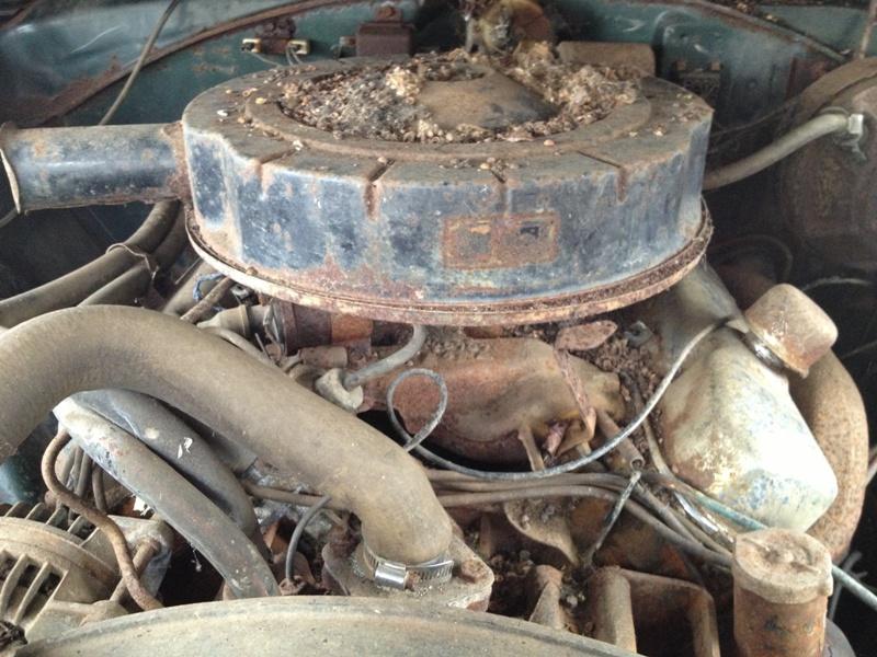 1967-Dodge-Coronet-RT-rotting-6